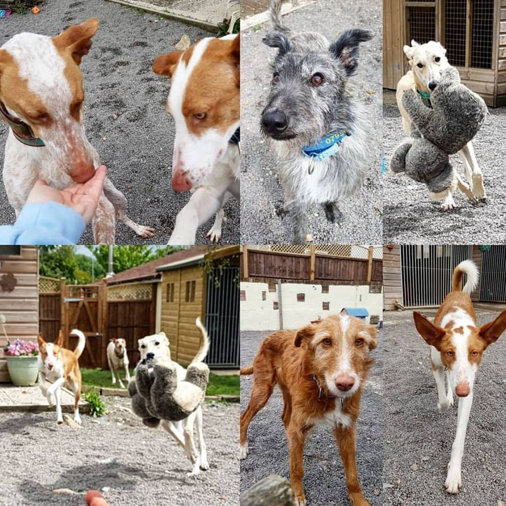 Dogs for homing
